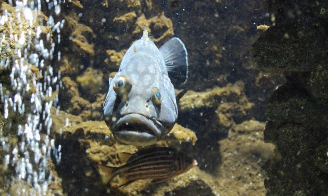 Name:  fish-rhodes.jpg Views: 114 Size:  96.8 KB